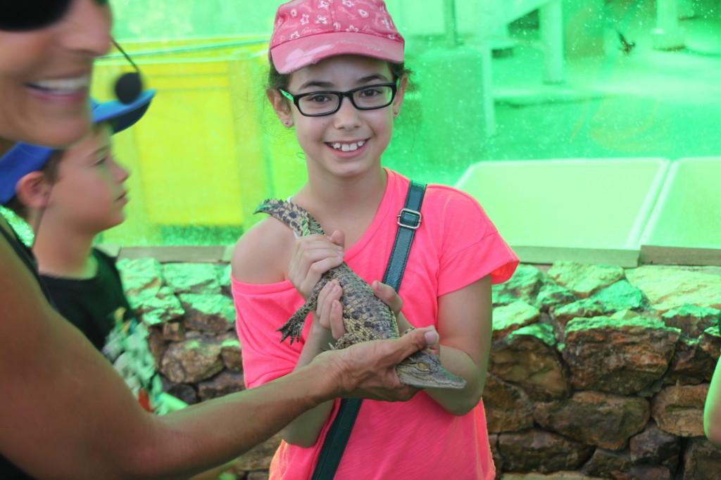 מלטפים תנין יאור קטן
