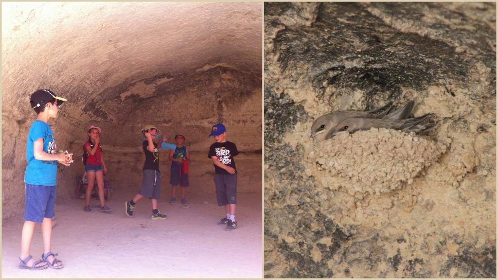 המערות במצוק הדרומי וקן דרורים זעיר