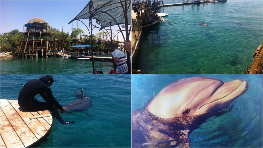 ריף הדולפיני באילת