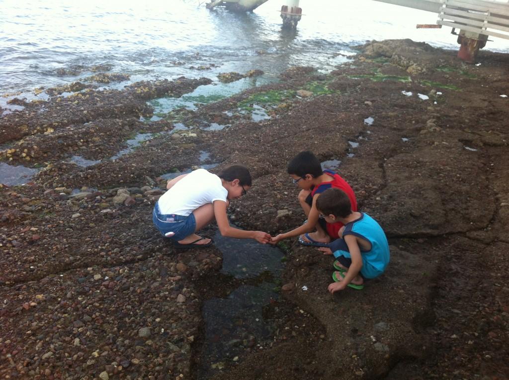 חוקרים בפעולה - פינת טבע קסומה בחוף הפרטי של המלון