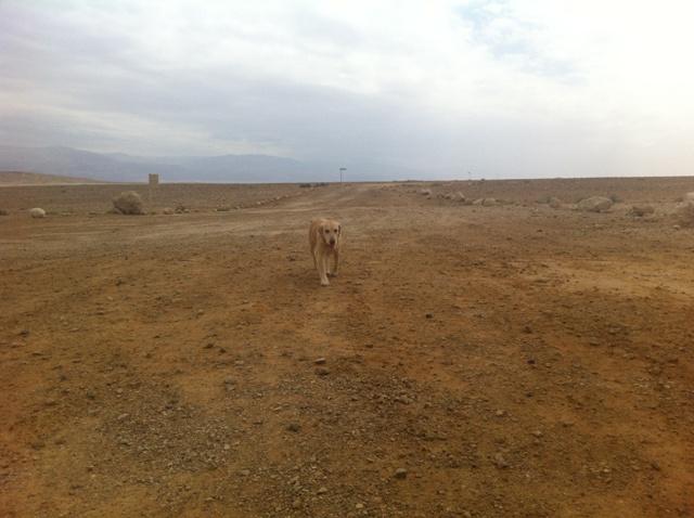 לולה, מיטיבת הלכת שלנו, מסתוואה במדבר